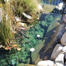 Small fish pond with large grass and landscaping rocks. Bright green water